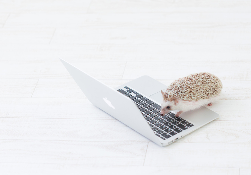 パソコンがあった方が副業の幅は広がる!在宅ワークにPCが必要な理由